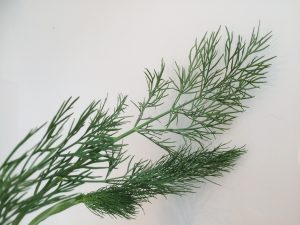Facts of Food - Dill