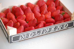 Erdbeeren putzen