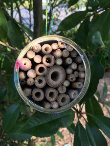 Insektenhotel DIY
